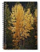 Aspen Gold Spiral Notebook