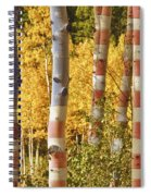 Aspen Gold Red White And Blue Spiral Notebook