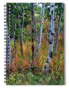 Aspen In Fall Spiral Notebook
