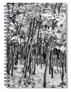 Aspen In Snow Black And White Spiral Notebook