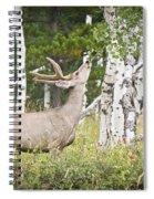 Aspen Nibbler Spiral Notebook
