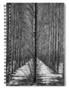 Aspen Rows Spiral Notebook