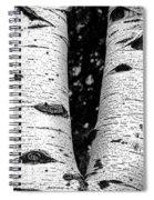 Aspen Tree Art Spiral Notebook