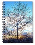 Aspen Tree At Sunset Spiral Notebook