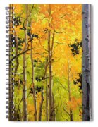 Aspen Trees Spiral Notebook