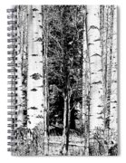 Aspens And The Pine Black And White Fine Art Print Spiral Notebook