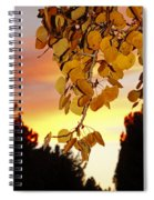 Aspens At Sunset Spiral Notebook