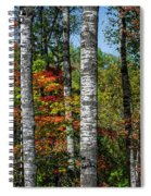 Aspens In Fall Forest Spiral Notebook