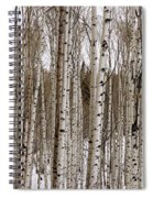 Aspens In Winter Panorama - Colorado Spiral Notebook