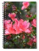 Aspired Azaleas Spiral Notebook