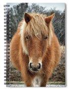 Assateague Island Horse Miekes Noelani Spiral Notebook