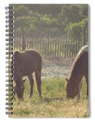 Assateague Island Wild Ponies Spiral Notebook