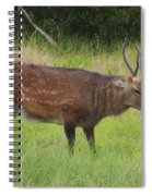 Assateague Sitka Deer Spiral Notebook