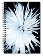 Aster In Black And White Spiral Notebook