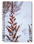 Astilbe Aglow In The Snow Spiral Notebook