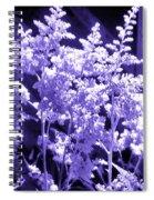 Astilbleflowers In Violet Hue Spiral Notebook