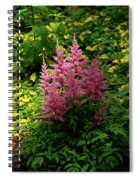 Astillbe In Light And Shadow Spiral Notebook