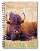 A Buffalo Staring Spiral Notebook