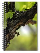 At Lachish Vineyard Spiral Notebook