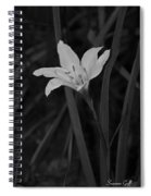 Atamasco Lily II Spiral Notebook