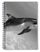 Atlantic Spotted Dolphin Spiral Notebook