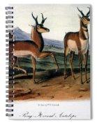 Audubon: Antelope, 1846 Spiral Notebook