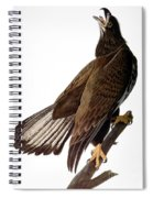 Audubon: Bald Eagle Spiral Notebook