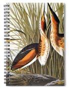 Audubon: Bittern Spiral Notebook