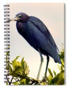 Audubon Blue Spiral Notebook