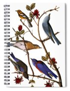 Audubon: Bluebirds Spiral Notebook