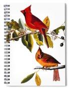 Audubon: Cardinal Spiral Notebook