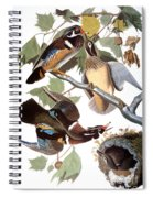 Audubon: Duck Spiral Notebook