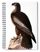 Audubon: Eagle Spiral Notebook