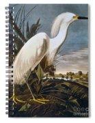 Audubon: Egret Spiral Notebook