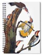 Audubon: Flicker Spiral Notebook