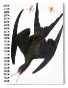 Audubon: Frigatebird Spiral Notebook