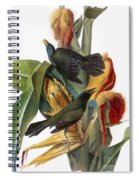 Audubon: Grackle Spiral Notebook