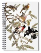 Audubon: Grosbeak Spiral Notebook