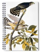 Audubon: Hawk Spiral Notebook