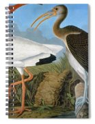 Audubon: Ibis Spiral Notebook