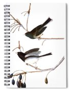 Audubon: Junco, (1827) Spiral Notebook