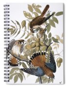 Audubon: Kestrel, 1827 Spiral Notebook