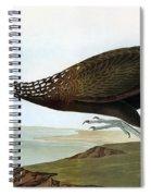 Audubon: Limpkin Spiral Notebook