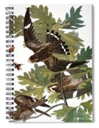 Audubon: Nighthawk Spiral Notebook