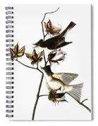 Audubon: Phoebe Spiral Notebook