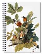 Audubon: Robin Spiral Notebook