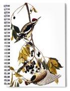 Audubon Sapsucker, 1827-38 Spiral Notebook