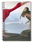 Audubon: Scarlet Ibis Spiral Notebook