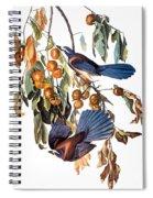 Audubon: Scrub Jay, 1827-38 Spiral Notebook