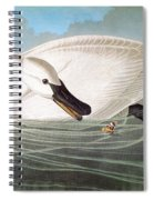 Audubon: Trumpeter Swan Spiral Notebook